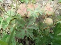 この植物の名前を教えてください 6