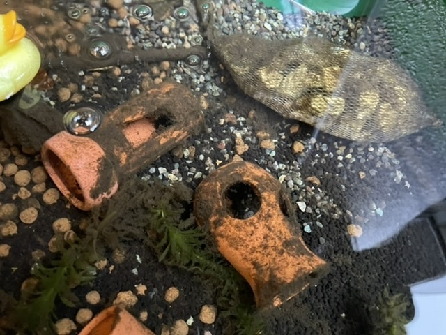 メダカを屋外でプラ舟で飼育しています。 冬の後半あたりから、画像のような、黒っぽいコケ?ゴミ?が目立つようになりました。 メダカは元気にしておりますが、さすがに水全体を入れ替えようと思っております。 これは一体何なのでしょうか? メダカ コケ 苔 水槽 アクアリウム