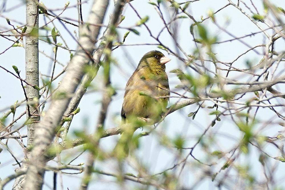 この野鳥の名前をご存知の方教えて下さい。
