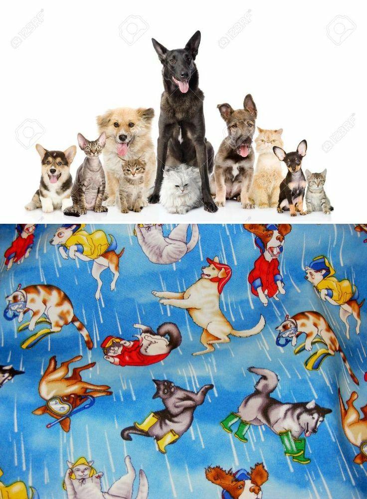 """とうとう(笑)・・・【Cats versus Dogs】という禁断のお題でお願いします! (Kittens vs Puppiesのイメージももちろん歓迎。単数同士の一騎打ちもw) . 永遠に終わらないテーマ、あなたはネコ派、それともイヌ派? 意地を張り合うのはそろそろやめてお互い仲良くいきましょうよ(笑)・・・という、初の""""ねこちゃんわんちゃん友好企画""""のつもりです。 洋楽/邦楽/歌入り/イ..."""