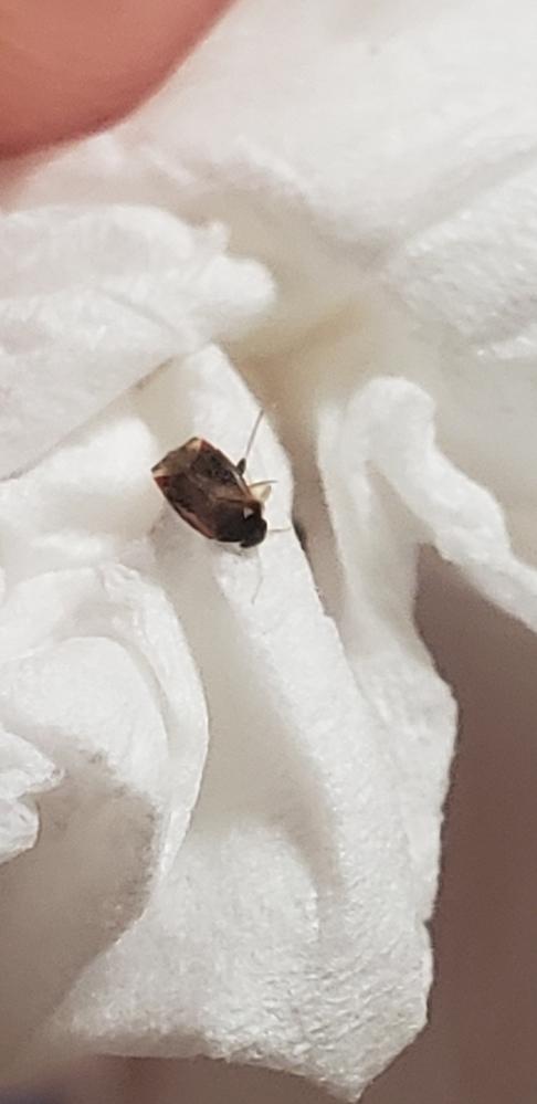 この虫の名前を教えてください