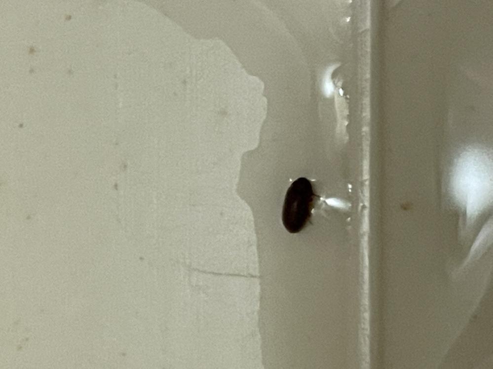 たまにお風呂場に入ってくる虫なんですけどこれはなんという虫でしょうか? また害はあるのでしょうか? わかる方教えてください!