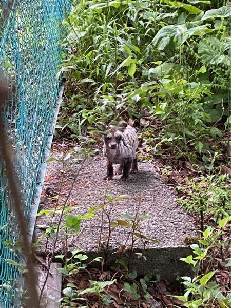 この動物ってなんですか?! 最近、公園でよく見かけます!教えてください!! 友達にハイエナって言われました!