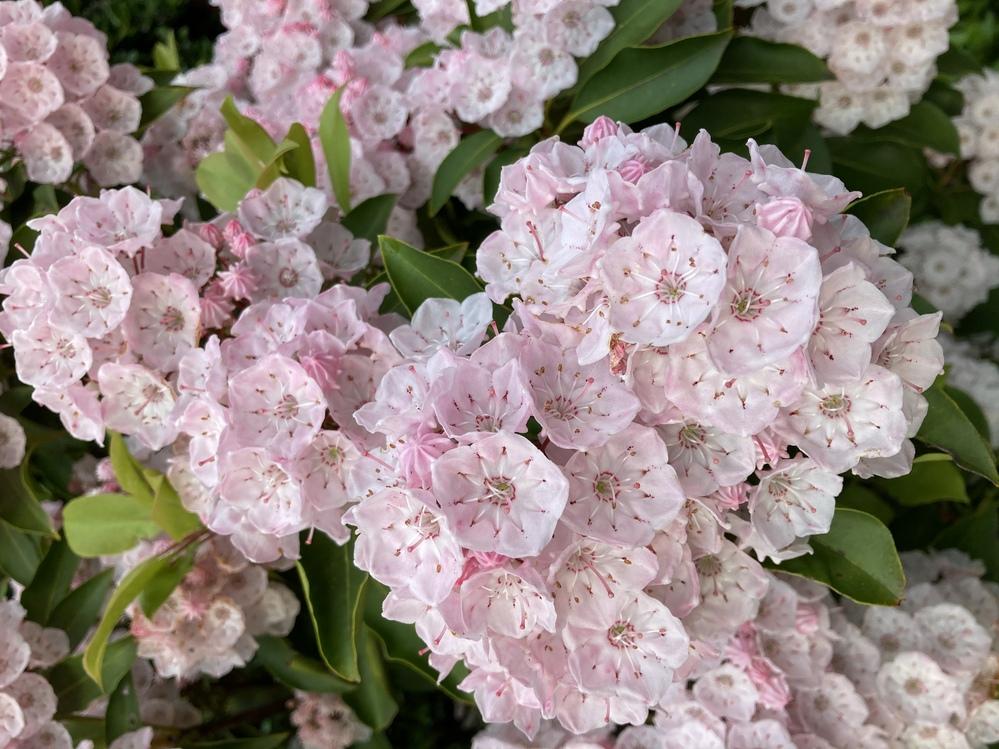 この写真の花はなんと言う名前の花ですか?