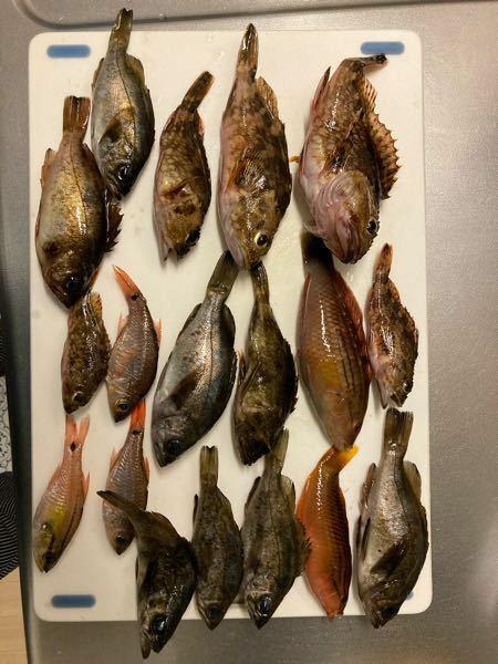 ガラカブとベラとその他の魚の名前を教えてください!