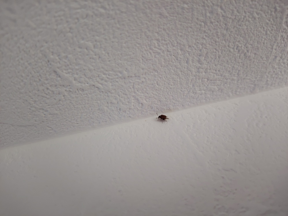 室内で発生した虫 窓際に大量とまではいかないも、それないの数の虫が発生しました。 窓が開いていて入ったならいいのですが、何かから発生したのであれば、元を絶つ必要ごあります。 しかし、何の虫なのかわからないので、発生源も対処もわかりません。 何の虫かわかるかた、教えて下さい。