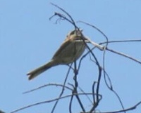 小鳥の名前を教えてください、 岐阜県米田白山で、 撮影20210503