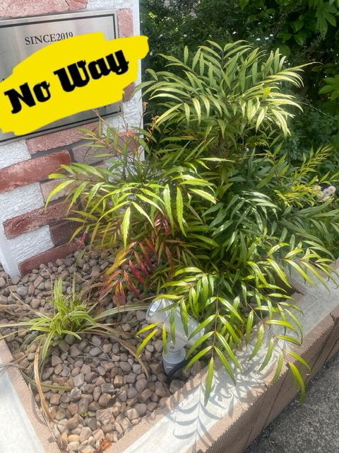 この画像の植物の名前を教えて下さい。 ホームセンターや花屋で売ってる物でしょうか?