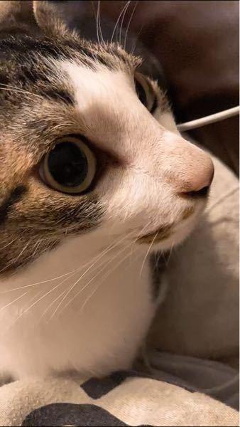 僕はアイコンに載っている通り猫を飼っています。 いつも甘えてきてとても可愛いのですが、 不審な行動をよくとっているので今回はその行動について質問させて頂きたいです! 具体的に不審な行動とは、一応写真に載せておいたのですがこのような真剣な眼差しで一点を見つめます。 それはどの猫でもよくあることだと思いますが、 寝ている時にいきなり飛び起きたと思ったら 毎回決まった場所(階段)を見つめているんですよ 少し心拍数が上がっているようにも感じられます 1度や2度ならまだしも、何十回と同じようなことがあります。 猫は人に見えないものが見えると言われているので少し気になりました 何かわかる方いたら回答よろしくお願いします!