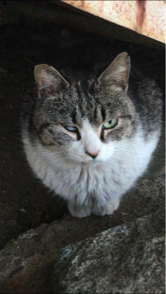 野良猫がいたのですが、右目は怪我ですか?病気ですか?このままほっといていたらまずいのかも教えてください。