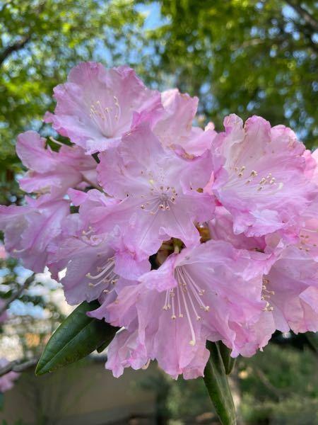 この花の名前を教えてください! よろしくお願いします。