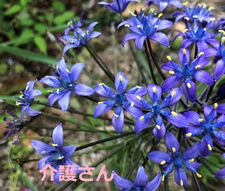 この植物の名前は何ですか? 撮影場所は兵庫県で撮影日時は2021年5月2日です。 よろしくお願いします。