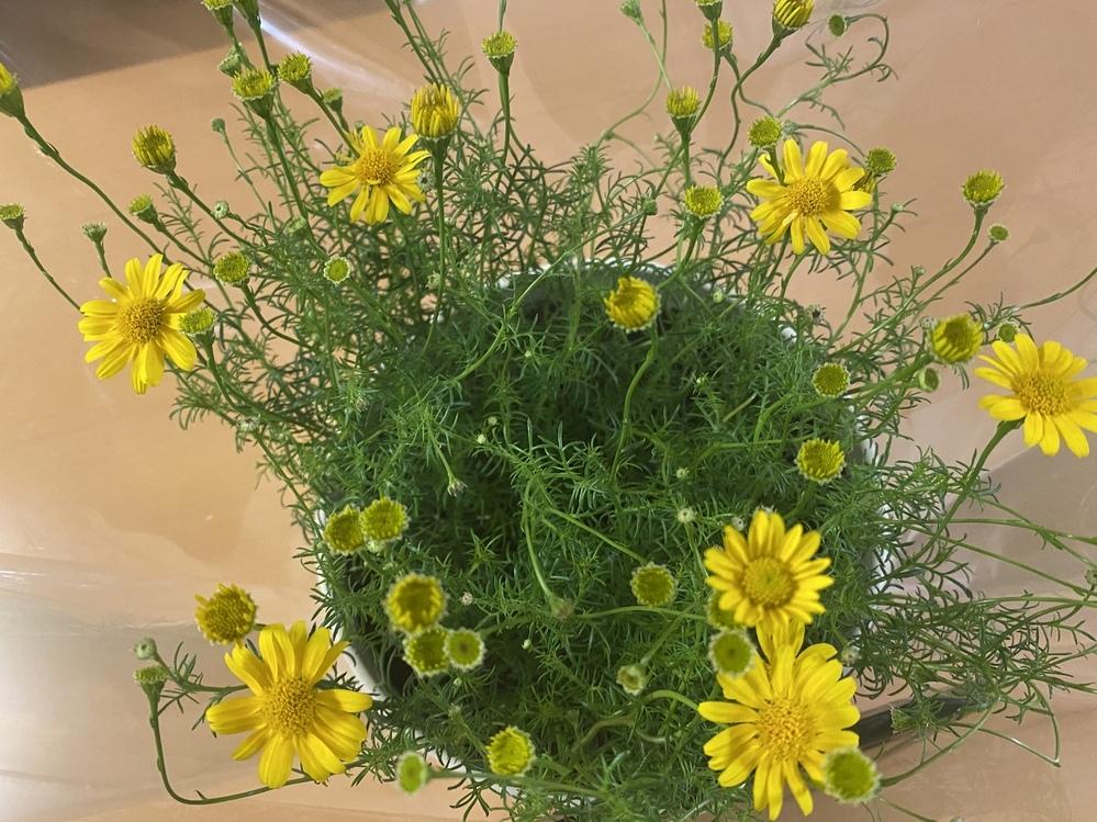 この花の名前を教えてください!^_^