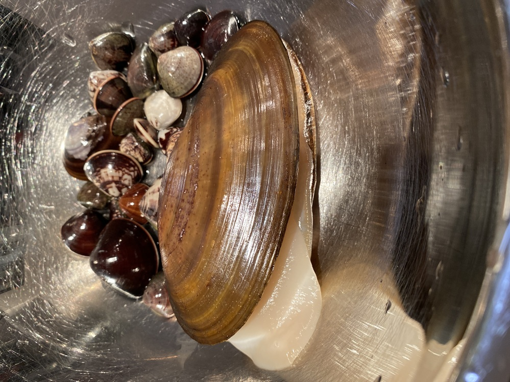 昨日、三重県の御殿場海岸の潮干狩りで子供が取ったこの大きな貝はなんでしょうか? 子供が知りたい、食べたいと言っています。 どなたか教えて下さい。