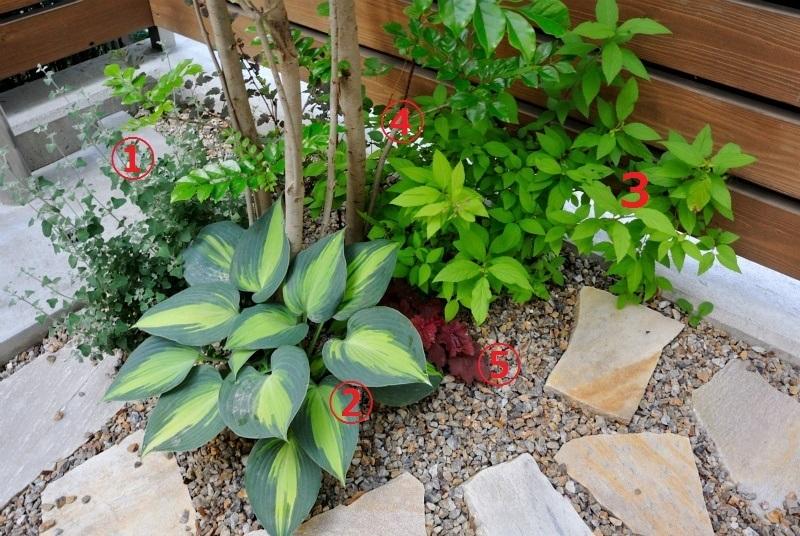 画像の植物の名前お分かりの方教えてください ①はユーカリですか? ⑤はヒューケラ? ②が気になります