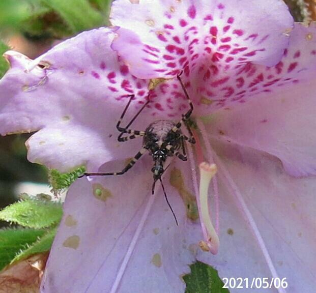 虫の名前を教えてください、 岐阜県米田白山で 撮影20210506