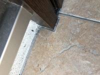 この虫はシロアリでしょうか? 玄関に羽のついた蟻みたいなのがいます。 シロアリでしょうか??