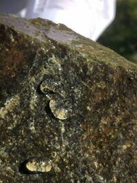 エビを入れていた水槽の岩にこんな卵みたいな透明なのが付いてたんですが何かわかる方教えてください。