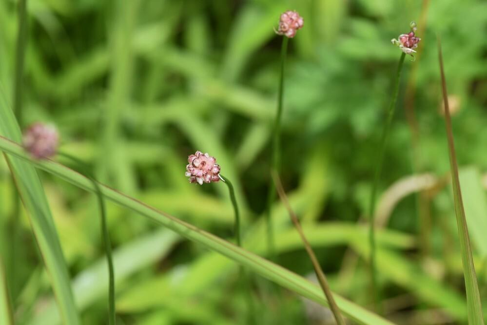 道端に生えていたこの植物の名前を教えてください。よろしくお願いいたします。