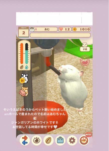 このハムスターを育てるアプリ(ゲーム)を教えて欲しいです。 アイドルの子が入れていたのでどのようなゲームなのかなとみたいので。