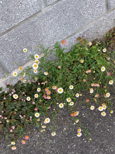 急募です! この花の名前を教えてください!