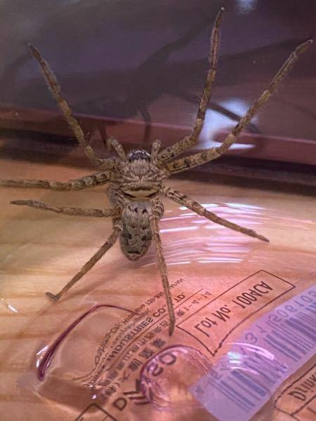 なんという蜘蛛でしょうか?毒はありますか?
