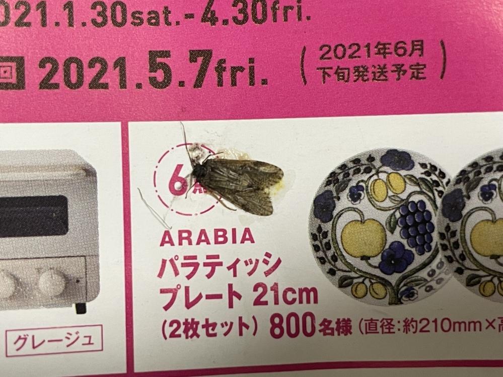 この蛾の名前を教えてください! 家の中に入ってきました! 体長は約9mmくらいです