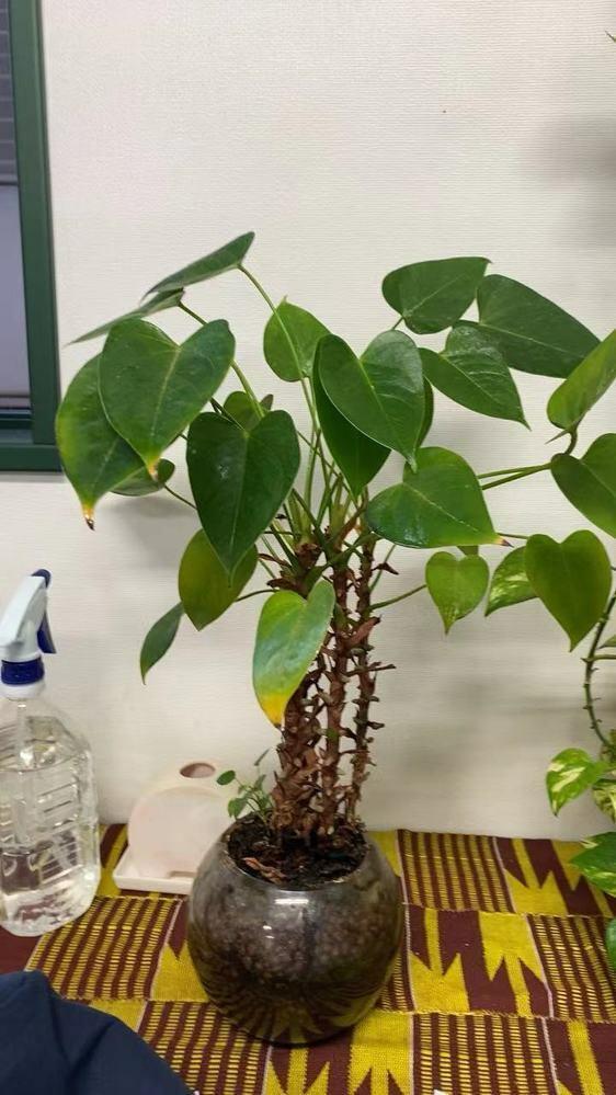 この植物の名前わかりますか?