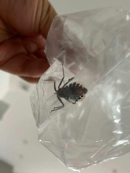 これは何の昆虫ですか?
