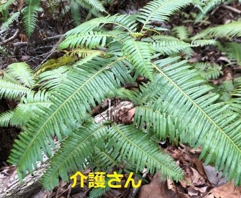 この植物の名前は何ですか? 撮影日時は2021年4月15日 撮影場所は兵庫県です。 よろしくお願いします。