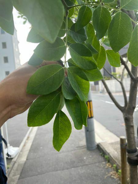 これ何の葉っぱですか?