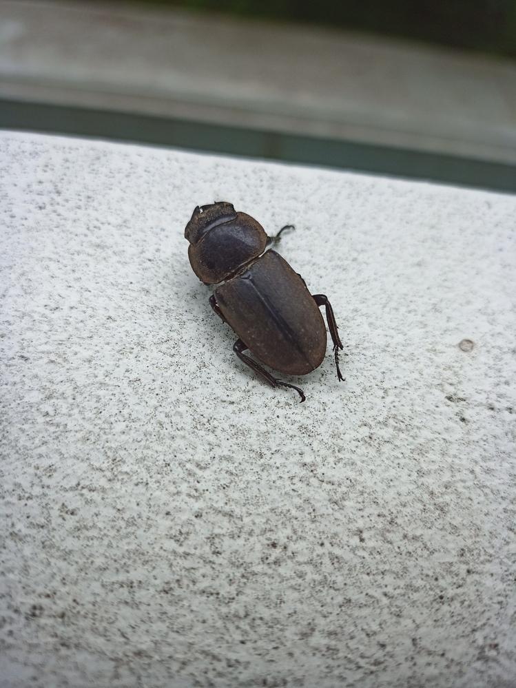 今拾った虫の死骸ですなんという虫ですか?