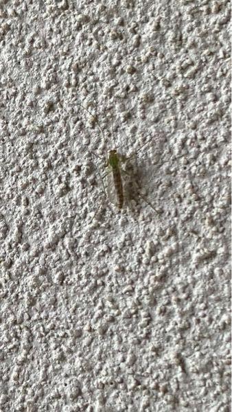 この虫はなんて虫でしょうか? 最近玄関や庭にたくさん出ます。 体長は1〜2センチくらいです。 殺虫剤を買いたいのですが、どんな虫か知りたいです。
