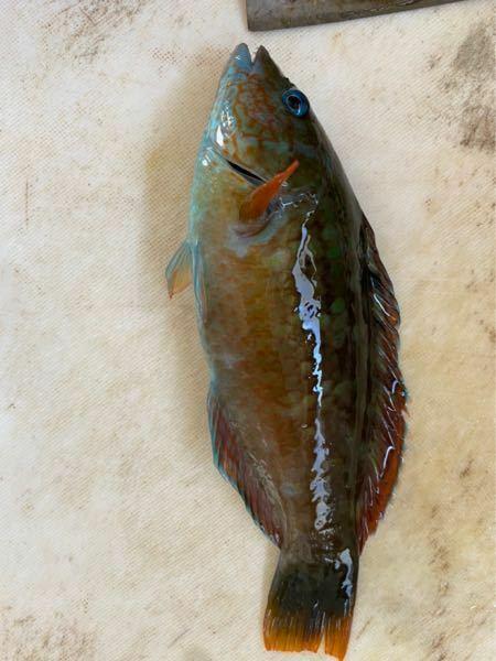 磯釣りでめちゃくちゃ釣れたんですけど、この魚はなんですか?? サイズは男性手のひらいっぱいぐらいです。