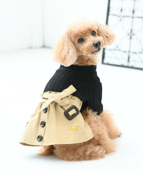 最近の犬は、ファッションにうるさくなった?