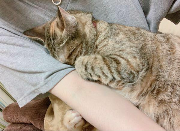 猫の鳴き声について うちの猫は本当によく鳴きます、寝てる時以外大体ないてます 結構な甘えん坊で人の指で指しゃぶりもするような子なので甘え鳴きはわかります。甘えに来ても私が構ってあげれない時等は暇なのか部屋出たがったりなのかでオーンって鳴いてます。窓の外が気になって鳴きます。ここまでは何となくわかります。 それ以外なのですが少し高めの場所から降りる時、走る時、壁や窓に手をついたりする時、大体...
