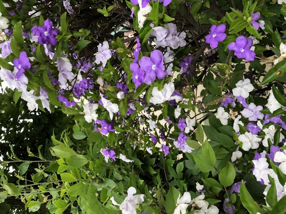 これは何の花ですか?今の時期よく見かけます。