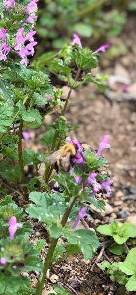 何ハチですか?