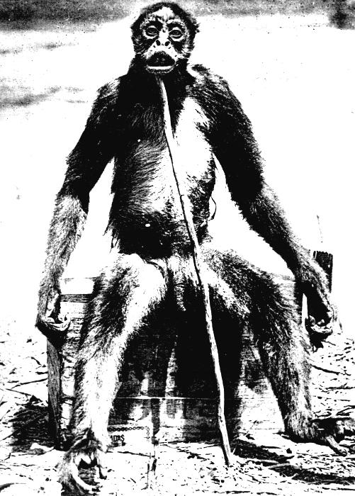 これなんて猿ですか? 動物に詳しい方教えてください
