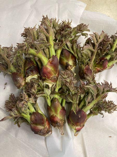 山菜について このたらの芽は食べ頃は過ぎてしまっていますか? 教えてください。 たらの芽 タラの芽 山菜