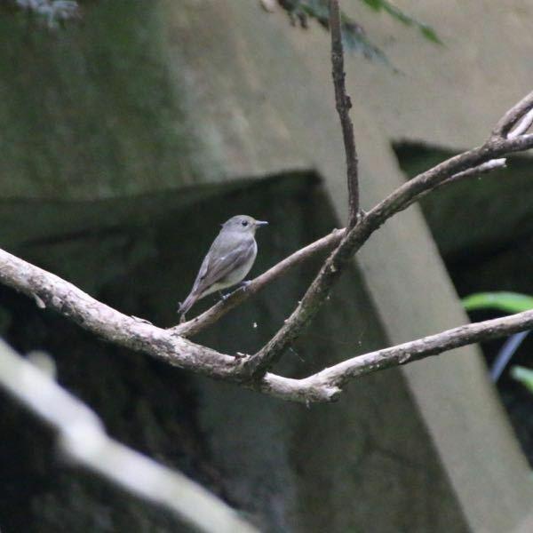 鳥の名前を教えてください