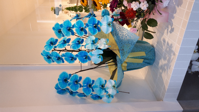 この花の名前を教えてください。(>_<)