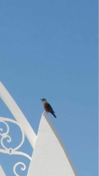 この鳥の名前はなんでしょうか。 画質が悪くて見えにくいですが、わかる方いらっしゃいましたら教えてほしいですm(_ _)m