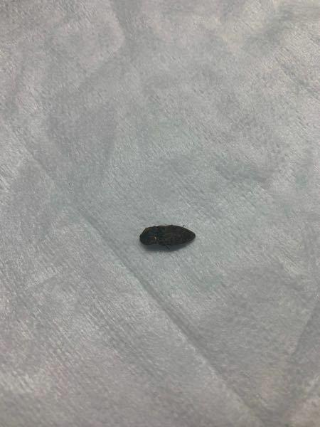 これは羽音を立てて飛ぶ虫ですか? 部屋でブンブン言ってたのでこの虫が犯人かに気になります、、、。