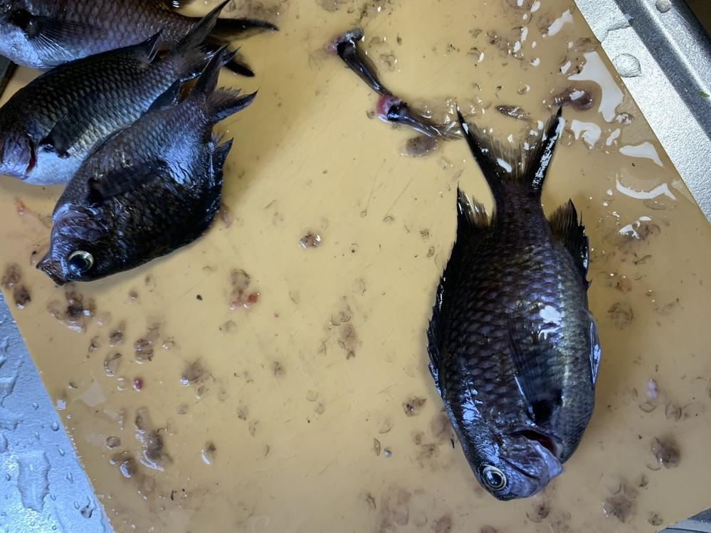 この魚は何ですか? 体長10センチ前後です。 食べれますか?