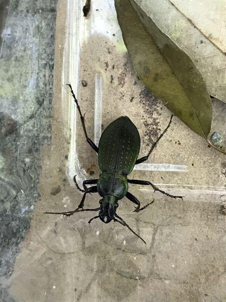 この虫何という名前でしょうか。