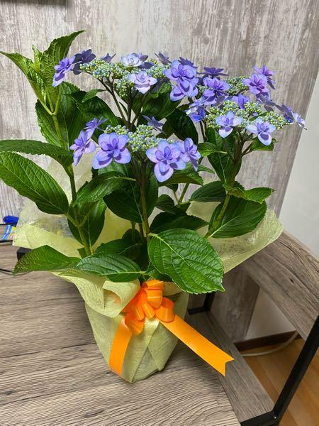 母の日に花鉢?を頂きました。(鉢に土が入っててそこに花が植わってるもの) 私は、花自体は可愛くて好きなのですがお世話をできる気がしません…。 出来ることならドライフラワーになってて小さな入れ物に入ってるお花を玄関に置きたかった…。 でも貰ったことはとても嬉しいのでダメにはしたくないです。 そこで知識のある方に聞きたいのですが、咲いているお花をどうにかしてドライフラワーにして入れ物に入れ玄関に飾るように出来ないのでしょうか。 息子と旦那から頂き2人も知識がなくお世話が必要と知らなかったようです。 お花が好きな方からすると花を殺して…と思われるのはわかってます。 ですが、どう考えてもお世話無理です。 また、うちは裏が山なため元々虫が多く困っているので外に植えるのも無理です。家にお花の匂いで虫がよってくるのも無理です。 なにかいい方法ないでしょうか。 誹謗中傷は勘弁してください。 邪道な事をしようとしてるのはわかってます。 知識のある方、経験ある方お教え下さい!