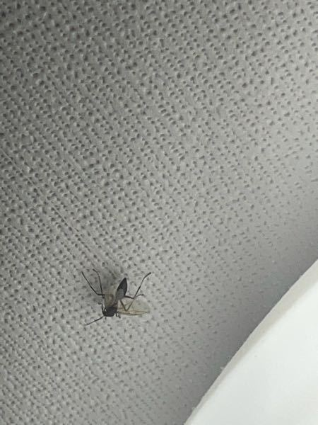 これなんと言う虫ですか?