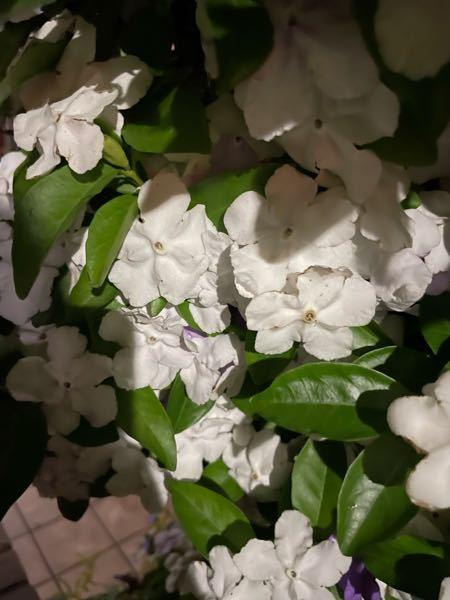 この花ってなんて花ですか! 通りすがりに見つけてすっごいいい匂いがしたので気になりました