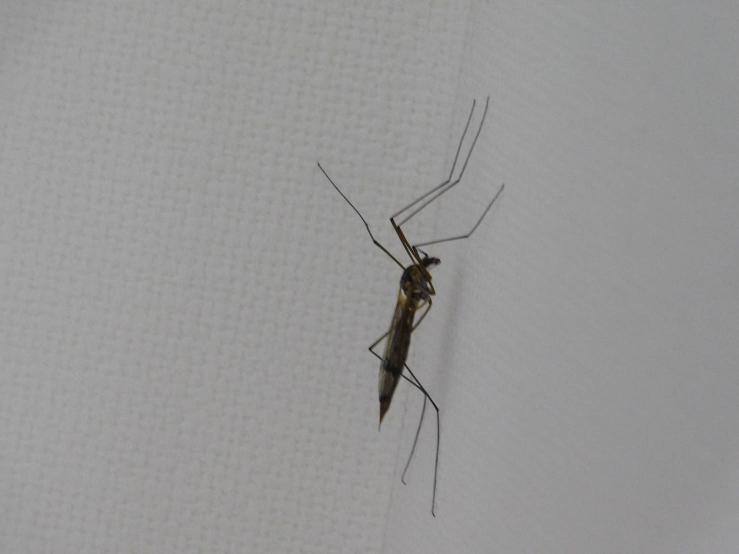 家に大きな虫がいたのですがなんて言う虫ですか?